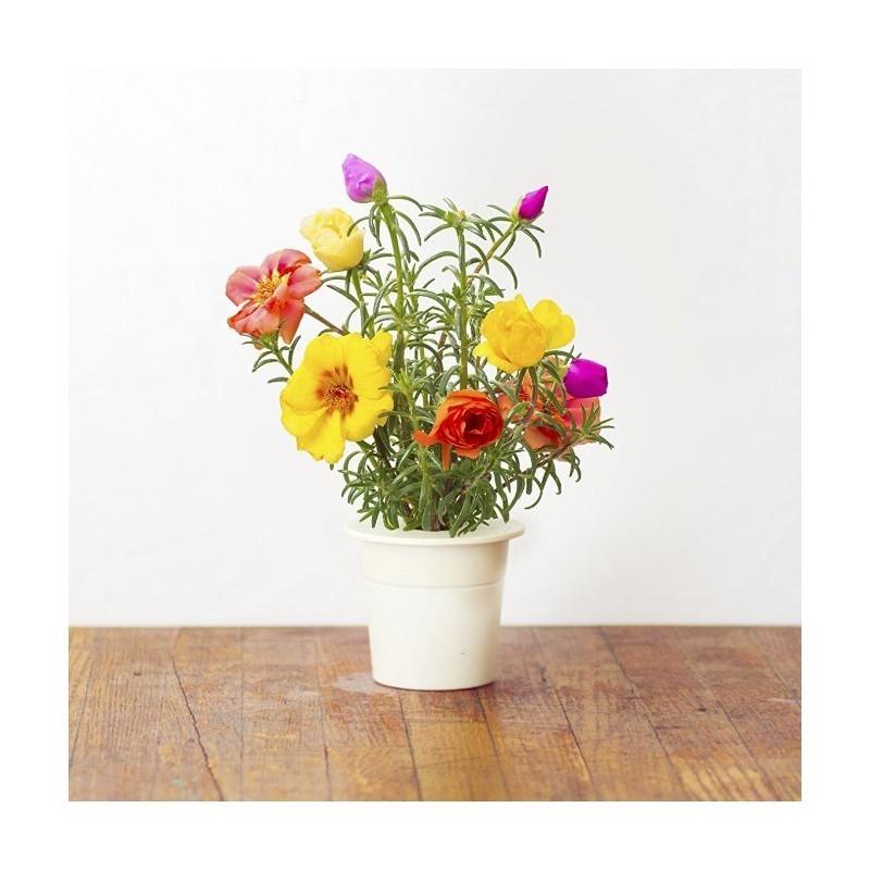 Click & Grow Smart Herb Garden refill Mururoos 3tk