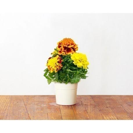 Click & Grow Smart Herb Garden refill Peiulill 3tk