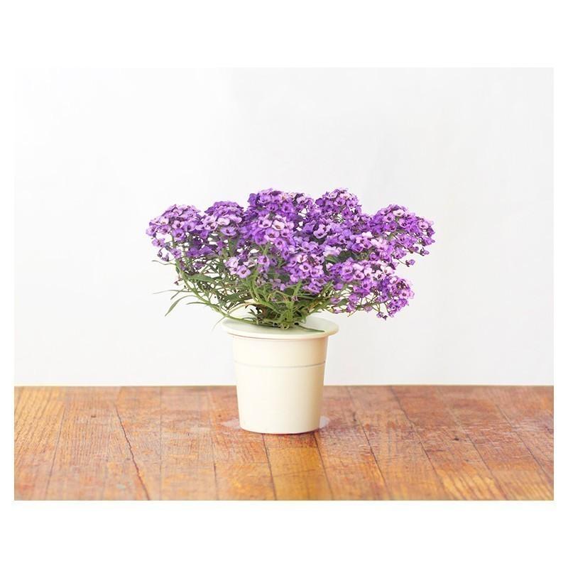 Click & Grow Smart Herb Garden refill Kivikilbik 3tk