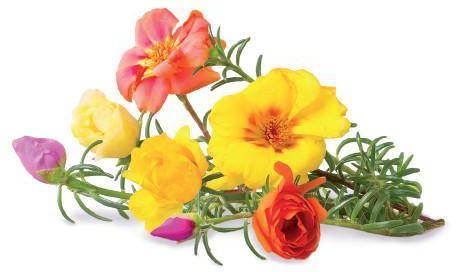 Click & Grow Smart Garden refill Mururoos 3tk