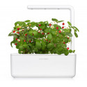 Click & Grow Smart Garden refill Wild Strawberry 3 штуки