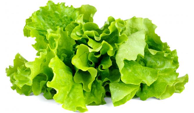 Click & Grow Smart Garden refill Латук 3 штуки