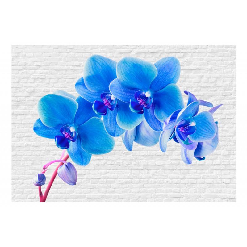 Fototapeet -  Blue excitation - 400x280