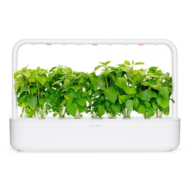 Click & Grow Smart Garden refill Kaneelbasiilik 3tk