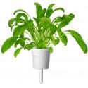 Click & Grow Smart Garden refill Mibuuna 3tk
