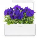 Click & Grow Smart Garden refill Sinine petuunia 3tk