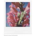 Polaroid SX-70 Color New