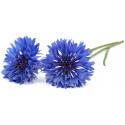 Click & Grow Smart Garden refill Rukkilill 3tk