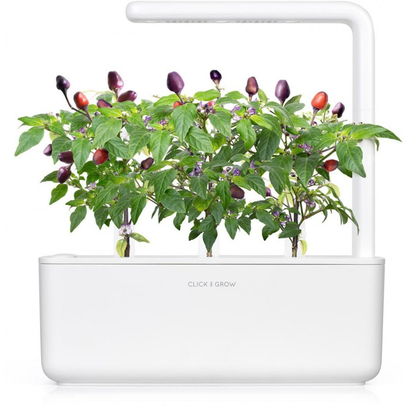 Click & Grow Smart Garden refill Purple Chili Pepper 3pcs