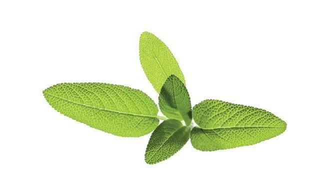 Click & Grow Smart Garden refill Aedsalvei 3tk