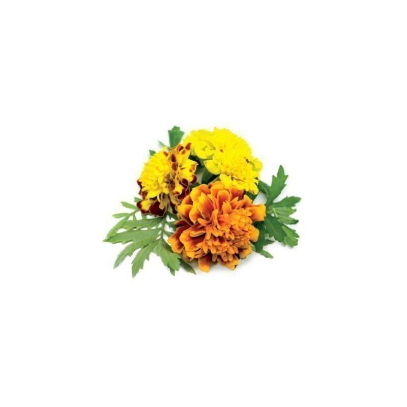 Click & Grow Smart Garden refill Peiulill 3tk