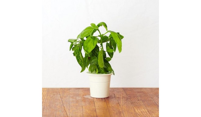 Click & Grow Smart Herb Garden кассета, Базилик (3 шт)
