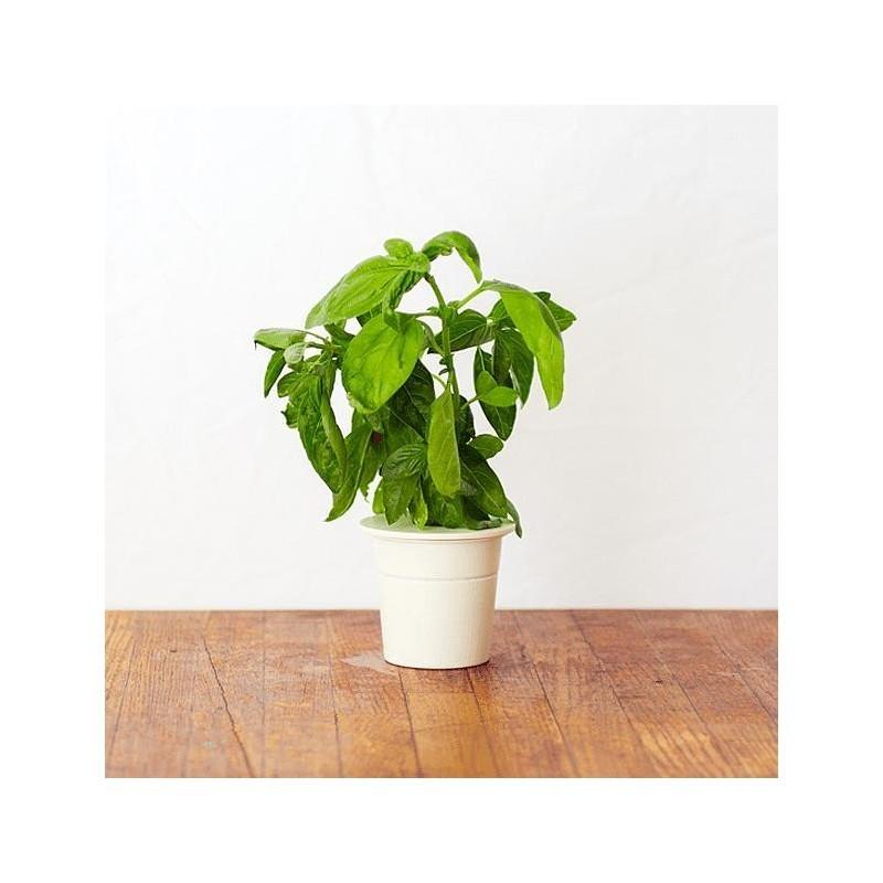 Click & Grow Smart Herb Garden refill Basiilik 3tk